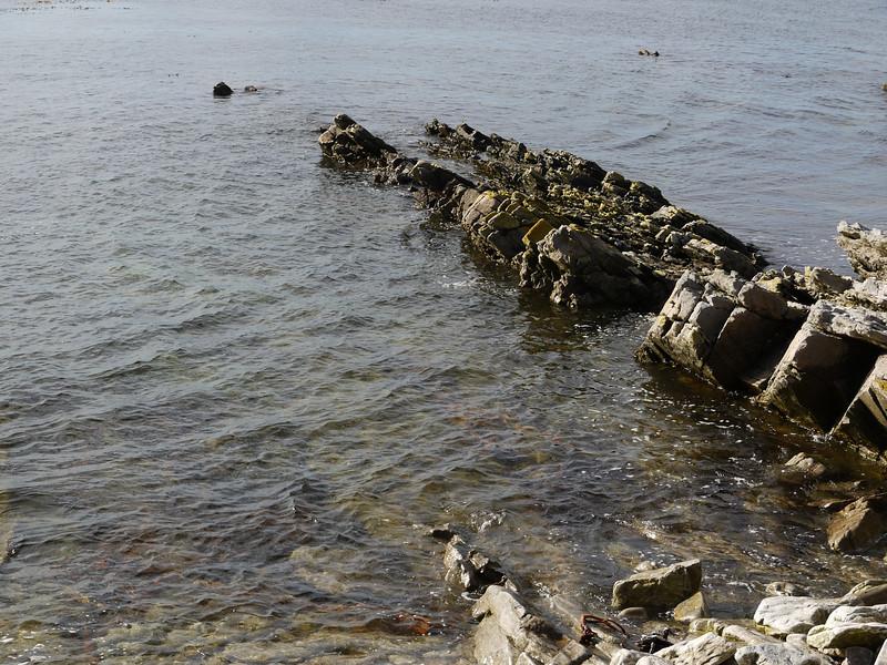 3970 - Carcass Island - 2011-03-07 - P1100256