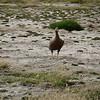 4139 - New Island - 2011-03-07 - P1100594