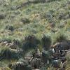 4149 - New Island - 2011-03-07 - P1020386