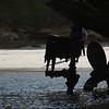 4127 - New Island - 2011-03-07 - P1100889