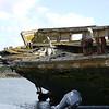 4126 - New Island - 2011-03-07 - P1100881