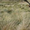 4350 - New Island - 2011-03-07 - P1100846