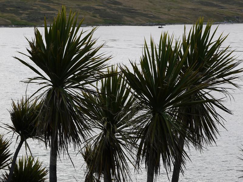 3927 - Carcass Island - 2011-03-07 - P1100410