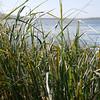 3953 - Carcass Island - 2011-03-07 - P1100288