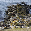 3997 - Carcass Island - 2011-03-07 - P1100290