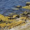 4034 - Carcass Island - 2011-03-07 - P1100478