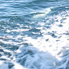 4109 - Carcass Island - 2011-03-07 - P1100577