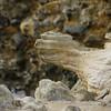 4297 - New Island - 2011-03-07 - P1100810