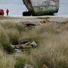 4122 - New Island - 2011-03-07 - P1100874