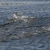 4059 - Carcass Island - 2011-03-07 - P1100369