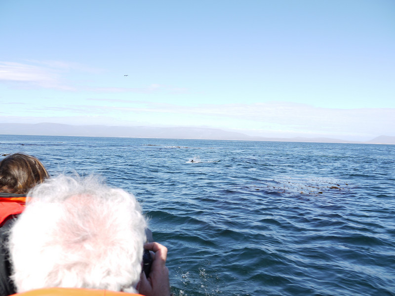 4106 - Carcass Island - 2011-03-07 - P1100529