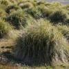 3962 - Carcass Island - 2011-03-07 - P1100291