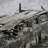 3918 - Carcass Island - 2011-03-07 - P1100403