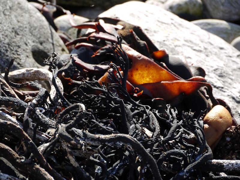 4000 - Carcass Island - 2011-03-07 - P1100285