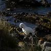 3992 - Carcass Island - 2011-03-07 - P1100328