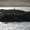 4046 - Carcass Island - 2011-03-07 - P1100281