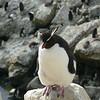 4234 - New Island - 2011-03-07 - P1020474