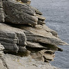 4296 - New Island - 2011-03-07 - P1100763