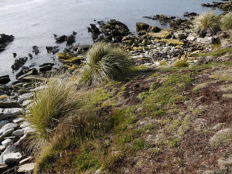 3963 - Carcass Island - 2011-03-07 - P1100257