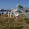 3945 - Carcass Island - 2011-03-07 - P1100457