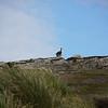 4075 - Carcass Island - 2011-03-07 - P1100402