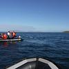 4101 - Carcass Island - 2011-03-07 - P1100552