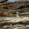 3985 - Carcass Island - 2011-03-07 - P1100264