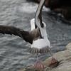 4336 - New Island - 2011-03-07 - P1100806