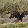 4348---New-Island---2011-03-07---P1100844