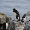 4193---New-Island---2011-03-07---P1100604