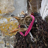 4129---New-Island---2011-03-07---P1100876