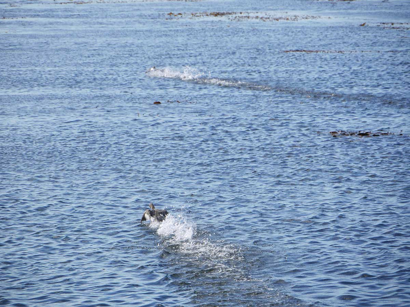 4071---Carcass-Island---2011-03-07---P1100381
