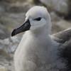 4271---New-Island---2011-03-07---P1100716