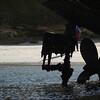 4127---New-Island---2011-03-07---P1100889