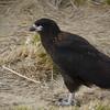4345---New-Island---2011-03-07---P1100841