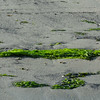 4380---New-Island---2011-03-07---P1020492