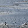 4049---Carcass-Island---2011-03-07---P1100358
