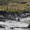 4033---Carcass-Island---2011-03-07---P1100477