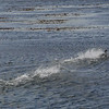 4055---Carcass-Island---2011-03-07---P1100365