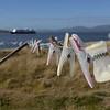3947---Carcass-Island---2011-03-07---P1100459