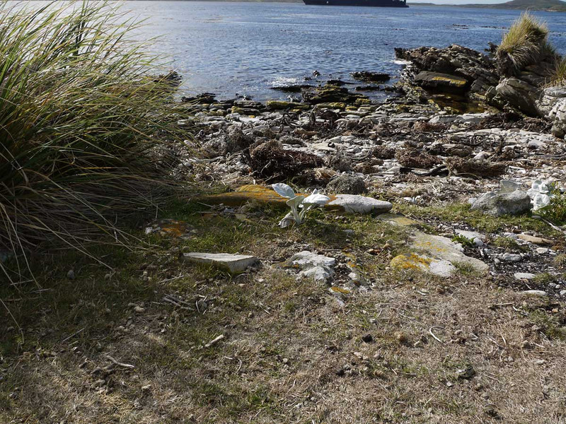 4003---Carcass-Island---2011-03-07---P1100346