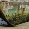 4125---New-Island---2011-03-07---P1100879