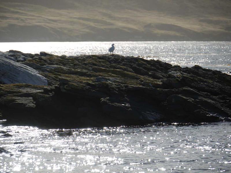 4046---Carcass-Island---2011-03-07---P1100281