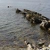 3970---Carcass-Island---2011-03-07---P1100256
