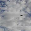 4356---New-Island---2011-03-07---P1100820
