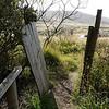 3944---Carcass-Island---2011-03-07---P1100456
