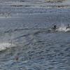 4052---Carcass-Island---2011-03-07---P1100362