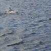 4047---Carcass-Island---2011-03-07---P1100354
