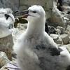 4258---New-Island---2011-03-07---P1020426