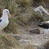 4286---New-Island---2011-03-07---P1100814